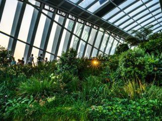 Sky Garden in London mit exotischen Pflanzen